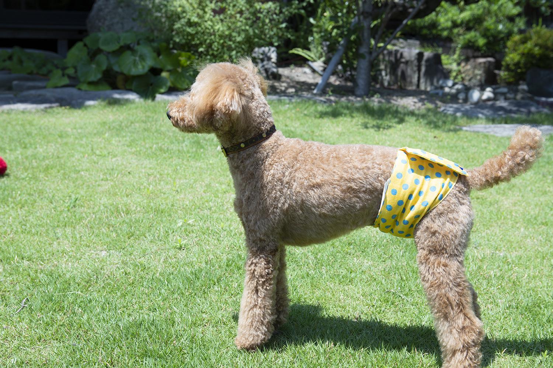 愛犬のオーダーマナーベルト 赤ちゃん犬〜高齢犬まで